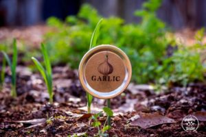 Mason Jar Lid Plant Label: A Classy Looking Garden Signing Idea in Smart Recycling Process