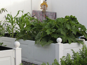 My Kitchen Garden Project: DIY Raised Bed with Wood Panels By Life at the Cottage