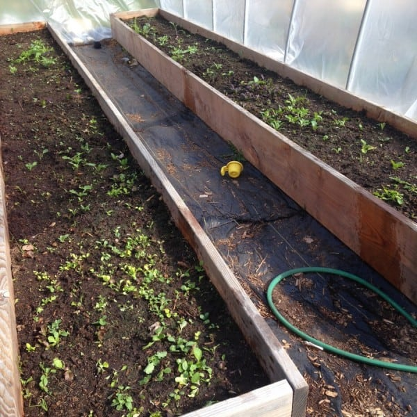 Raised Garden Box with Polytunnel Greenhouse: A Smart Cheaper Greenhouse Alternative