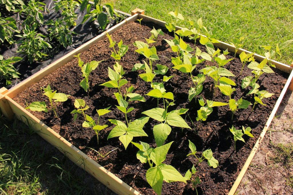 Simply Easy DIY: Raised Garden Bed with Wood in Nice Square Shape