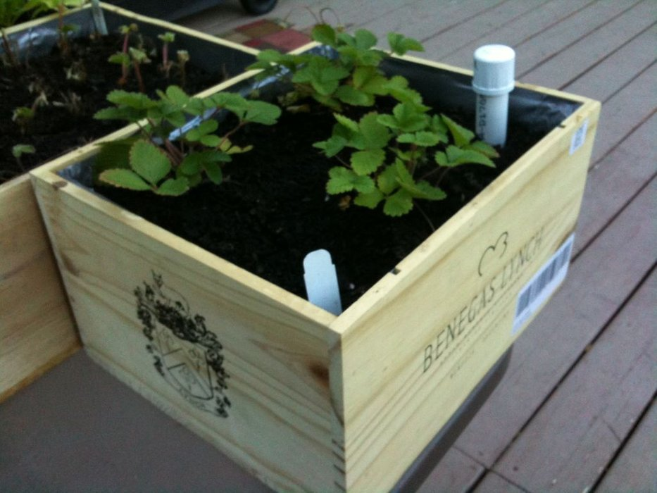 Wine Box Wicking Planter Boxes: A Recycling Raised Garden Planter Project