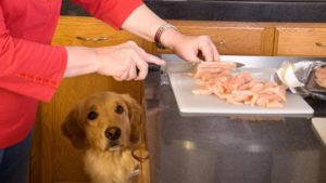 Homemade Dog Food Recipes and Organic Treats