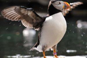 Tierpark Dählhölzli – Bern Public Zoo must Visit – Attractions in Switzerland