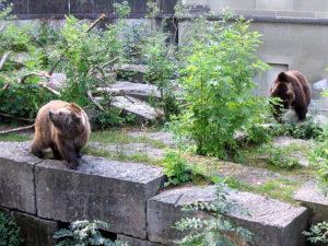 Switzerland Bern Bärengraben bear pit – Things to do in Bern